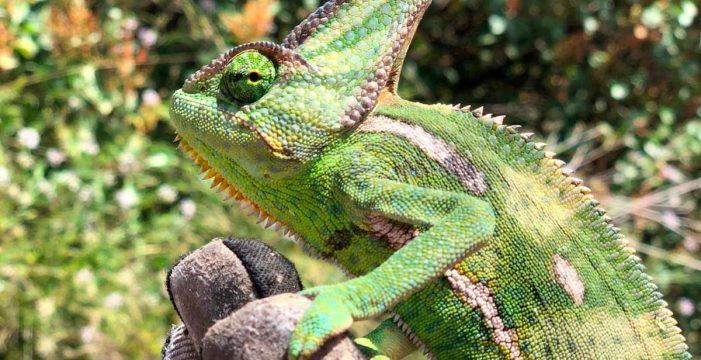 Conservar la biodiversidad, una responsabilidad de todos