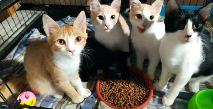 """Esther Campos: """"El maltrato que más está habiendo es a gatos, que son los eternos olvidados"""""""