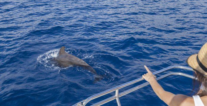 Tenerife presenta hoy su carta sostenible para avistar cetáceos