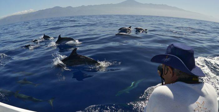 Pioneros en el estudio de los cetáceos en Canarias compartirán sus experiencias en un debate de Arona SOS Atlántico