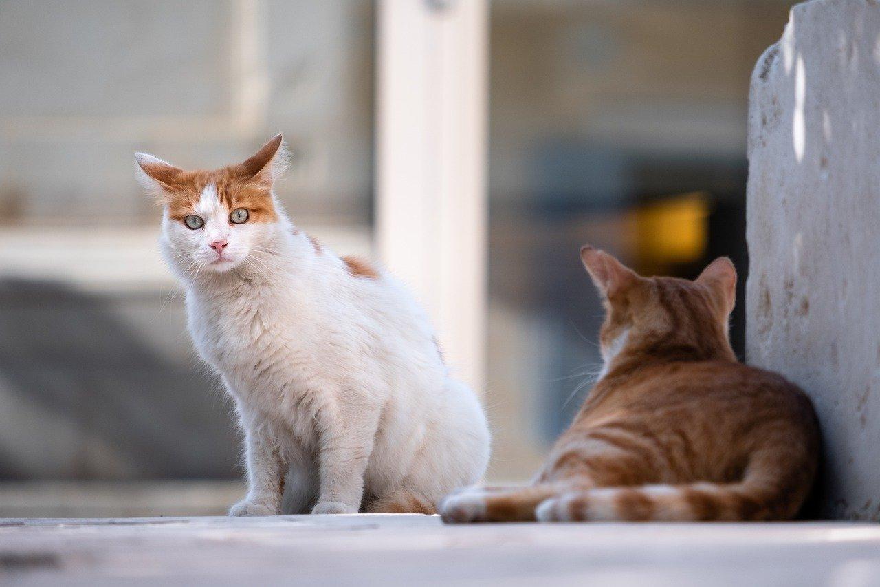 Imagen de recurso en la que aparecen dos gatos. Pixabay