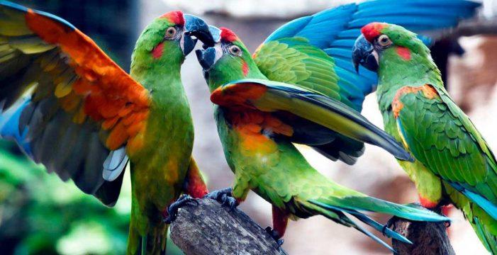 1,3 millones para la conservación de especies
