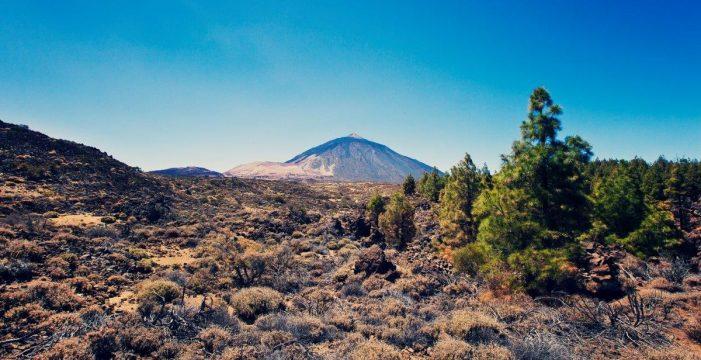 El Teide podría quedarse sin su tradicional retama