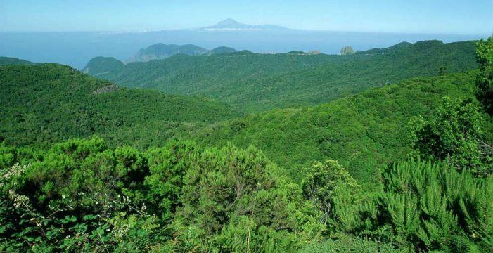El Garajonay cumple hoy 40 años como Parque Nacional