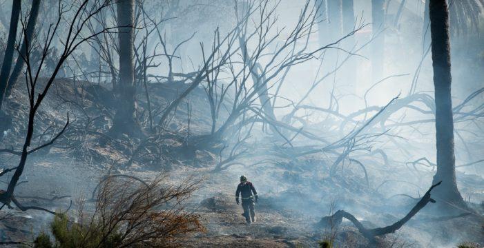 Siete horas peleando contra un incendio en Bajamar