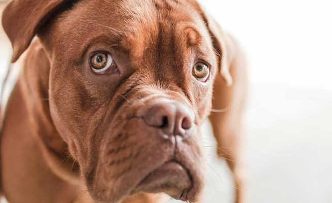 La custodia compartida de las mascotas en caso de separación o divorcio podría ser real