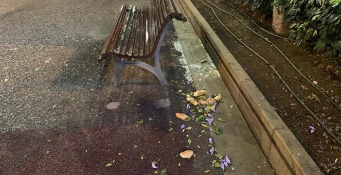 """Aumentan las ratas en la Rambla de Santa Cruz: """"Vuelven a dejarles pan"""""""
