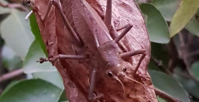 """""""Es como un acorazado"""": encuentran un extraño insecto en el Barranco de Badajoz"""